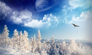 eagle snow forest moon