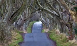 tree road tunnel
