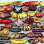 Peru Passes Monumental Ten Year Ban on Genetically Engineered Foods