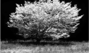 black-white-heaven-light-small