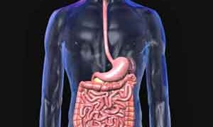 digestion-small-300