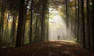 light-through-forest-small-300