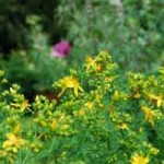 The Conscious, Healing Nature of Plants and Plant Medicines