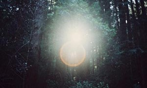 forest-creation-orb-light-spirit-small-300