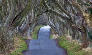tree-road-tunnel-small-300