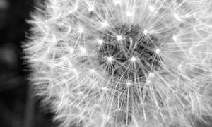 flower-wind-whisp-light-awareness-small-300