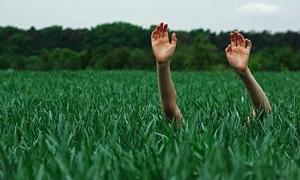 grass-hands-happy-nature-small-300