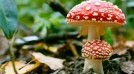 6 Incredible Ways Mushrooms Can Save the World – A Talk With Paul Stamets, Mycologist (Video)