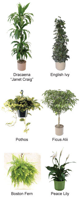 house-plants-2