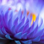 The 8 Taoist Secrets of Radiant Health and Longevity