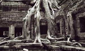 temple-roots-small-300