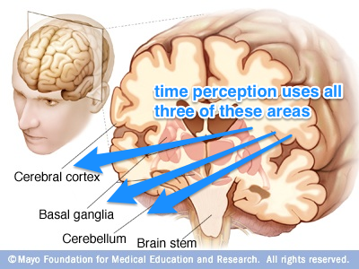 brain section map