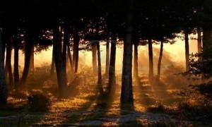 awakening forest