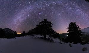 starry sky tree