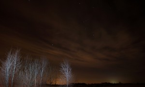 orion trees