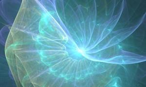jellyfish fractal light