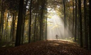 light through forest
