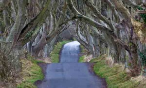 tree-road-tunnel-small