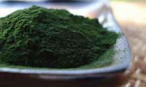 chlorella-small-300