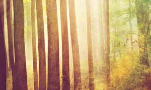 rejuvenation-nature-trees-light-art-small-300