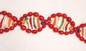 food-genes-dna-small-300